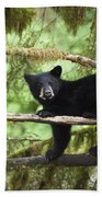 Black Bear Ursus Americanus Cub In Tree Beach Towel