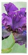 Black Bearded Iris Beach Towel