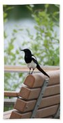 Black-billed Magpie Pica Hudsonia Beach Towel