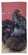Black Chicken Beach Towel