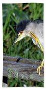 Black Crown Night Heron Scratching Beach Towel