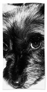 Black Dog Looking At You Beach Towel