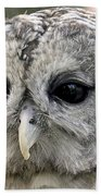 Black Eye Owl Beach Towel