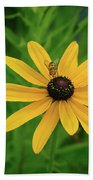 Black Eyed Susan And Friends Beach Towel