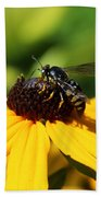 Black Eyed Susan With Wasp Beach Towel
