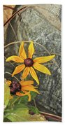 Black Eyed Susans Next Gray And Black Rock Fading Foliage Green 2 10222017 Colorado Beach Towel
