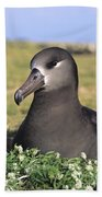 Black Footed Albatross Beach Towel