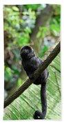 Black Goeldi's Marmoset Sitting On The Vine Beach Towel