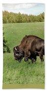 Black Hills Bull Bison Beach Towel by Robert Frederick