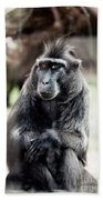 Black Macaque Monkey Sitting Beach Towel