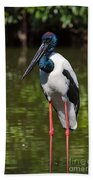 Black-necked Stork Beach Towel