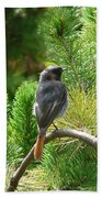Black Redstart Beach Towel