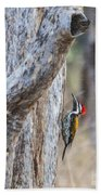 Black-rumped Flameback Aka Lesser Goldenback Beach Towel