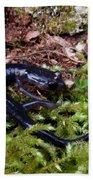 Black Salamander Beach Towel
