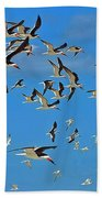 The Black Skimmers Beach Towel