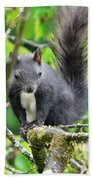 Black Squirrel In The Cherry Tree Beach Towel