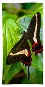 Black Swallowtail Butterfly In Iguazu Falls National Park-brazil  Beach Towel