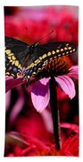 Black Swallowtail Butterfly On Coneflower Square Beach Towel