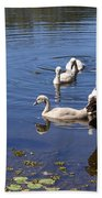 Black Swan's Beach Towel