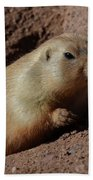 Black Tailed Prairie Dog Climbing Out Of A Hole Beach Towel