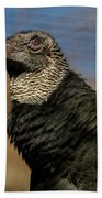 Black Vulture 1 Beach Sheet