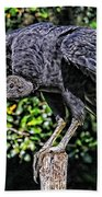 Black Vulture On A Fence Post Beach Towel