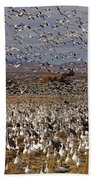 Blast Off Bosque Del Apache Beach Towel