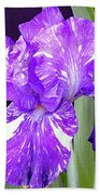 Blended Beauty - Bearded Iris Beach Towel