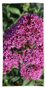 Blooming Pink Phlox Flowers In A Spring Garden Beach Sheet