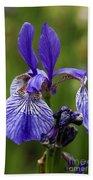 Blooming Purple Iris Beach Towel