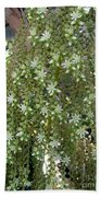 Blooming Succulent Plant. Big And Beautiful Beach Towel