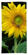 Blooming Sunflower Closeup Beach Towel
