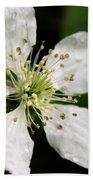 Blossom Square Beach Towel
