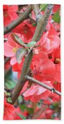 Blossoms Branches And Thorns Beach Towel