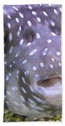 Blow Fish Close-up Beach Towel
