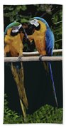 Blue And Gold Macaw 1 Beach Towel