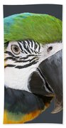 Blue And Gold Macaw Digital Freehand Painting Beach Towel