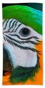 Blue And Gold Macaw Headshot Beach Towel