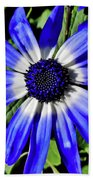 Blue And White African Daisy Beach Towel