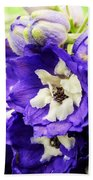 Blue And White Delphiniums Beach Towel