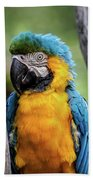 Blue And Yellow Macaw Portrait  Beach Towel