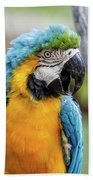 Blue And Yellow Macaw Vertical Beach Towel