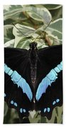 Blue-banded Swallowtail Butterfly Beach Towel