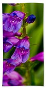 Blue Bells Wild Flower Beach Towel