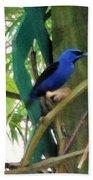 Blue Bird With A Curved Bill Beach Sheet