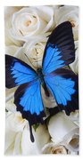 Blue Butterfly On White Roses Beach Towel