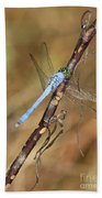 Blue Dragonfly Portrait Beach Towel by Carol Groenen