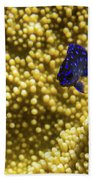 Blue Fish In Coral Beach Towel