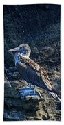 Blue-footed Booby Prize Beach Towel