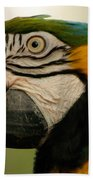 Blue Gold Macaw South America Beach Towel
